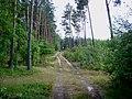 WILCZE ŁUGI lato 34 - panoramio.jpg