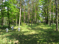 WWI cemetery Merzdorf (main path looking northeast).png