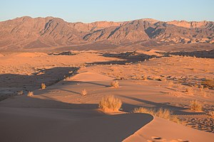 Wadi Araba Dunes at Sunset.jpg