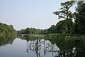 Wakulla River, Wakulla County (Florida).jpg