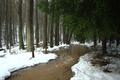 Wartenberg Landenhausen Populus Snowmelt 2011 b.png