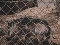Warthog No Battles.jpg