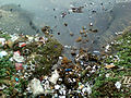 Water pollution due to domestic garbage at RK Beach 02.jpg