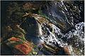 Water stream 05.JPG