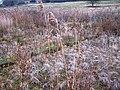 Watercress beds, Newington - geograph.org.uk - 639166.jpg