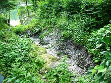 A gully surrounded by low-lying leafy plants and trees. The bottom of the gully is full of shells, and it leads to a lake