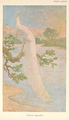 White peacock by Charles Knight.png