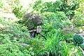 Wikipedia 13. Fotoworkshop Botanischer Garten Erlangen 2013 by-RaBoe 016.jpg