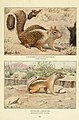 Wild animals of North America, intimate studies of big and little creatures of the mammal kingdom (Page 539) (6217228974).jpg