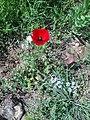 Wild flower6.jpg