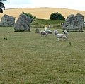 William Stukeley in the late 17th century believed that Avebury had been built by druids. - panoramio.jpg