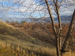 Winter Morning at Okanagan Lake Provincial Park.JPG