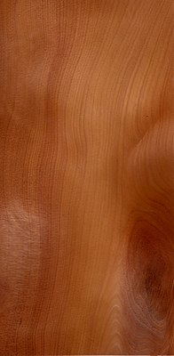Wood taxus baccata.jpg