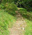 Woodland Steps - East Riddlesden Hall, Bradford Road - geograph.org.uk - 977289.jpg
