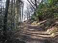 Woodland in Barbondale - geograph.org.uk - 131224.jpg