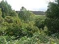 Woodland west of Cardney House - geograph.org.uk - 525888.jpg