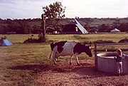 Worthy Farm, a dairy farm for most of the year, is shown here in 1983 as the first festival-goers' tents are pitched.  When the music started the tents stretched half-way to the pyramid stage.