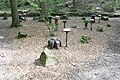 Znojmo-Gránické-údolí-houby2019.jpg