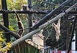 Zoo de Lisboa by Juntas 93.jpg