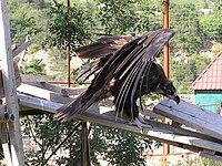 Zoo in Yalta 010.jpg