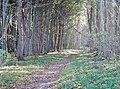 Zugang zur Steilküste - panoramio.jpg