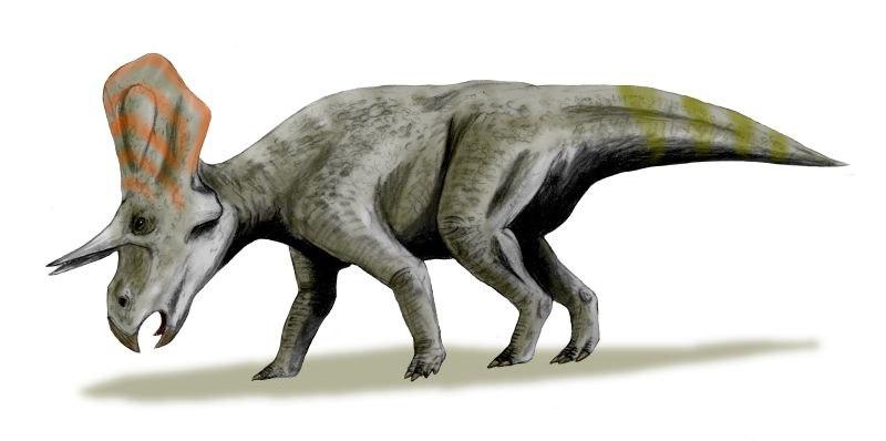 Zuniceratops BW