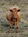 """A Load of Bull"" (4087370880).jpg"