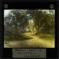 """Forest Path in Okoyong, Calabar"", late 19th century (imp-cswc-GB-237-CSWC47-LS2-020).jpg"