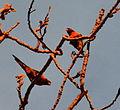 (1)Birds Kensington Park 055a.jpg