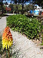 (Jardín Botánico de Quito) a4.JPG