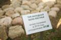 Аллея туй APS в Минске.png