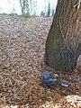 Бучач за часів Мосціпана, сміття біля МР та РДА 5-11-2-19.jpg