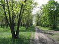 Дендрологічний парк 191.jpg