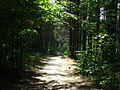 Дорога в лесу - panoramio (38).jpg
