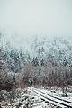 Зима, 2012 рік.jpg