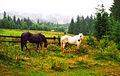 Карпатські коні 2.jpg