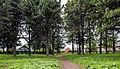 Кедровая роща и лиственничная аллея в деревне Нижние Кропачи.jpg
