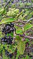 Криворізький ботанічний сад 11.jpg