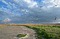 Мартини на Солоному лимані.jpg