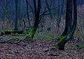 Містичний ліс.jpg