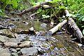 Нетрі річки 2 Поляниця.jpg