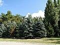 """Парк пансионата """"Энергетик"""" - panoramio.jpg"""
