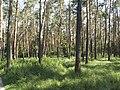 Украина, Киев - Голосеевский лес 01.jpg