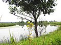 У Двуреченского ручья. - panoramio.jpg
