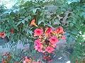 أزهار ملونة ويانعة.jpg