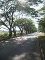 ถนนที่หนองคาย - panoramio.jpg