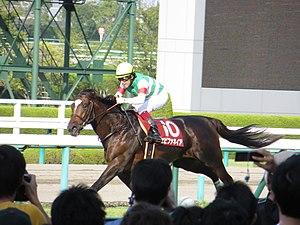 神戸新聞杯's relation image