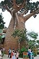 圣淘沙-是真树吗? - panoramio.jpg