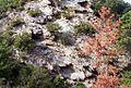 奠供山(てんぐやま) - panoramio.jpg