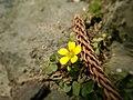 小花.jpg